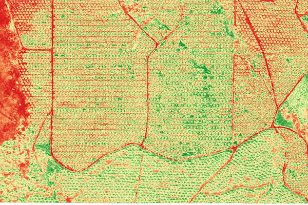 vegetation index for plantation, UAV survey